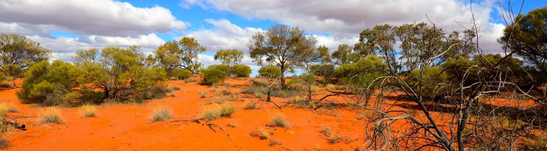 Nous sommes spécialisés dans l'élevage de saurien désertique.