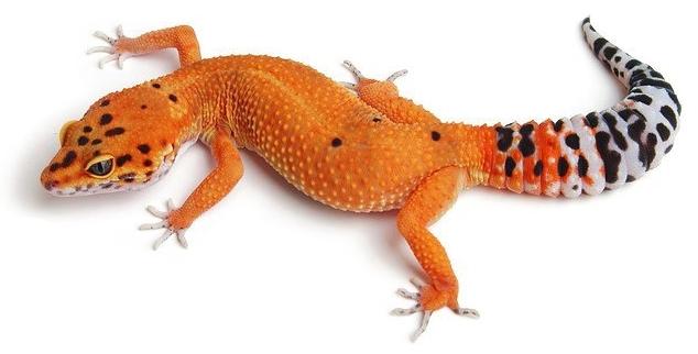 Reptilus project tangerine