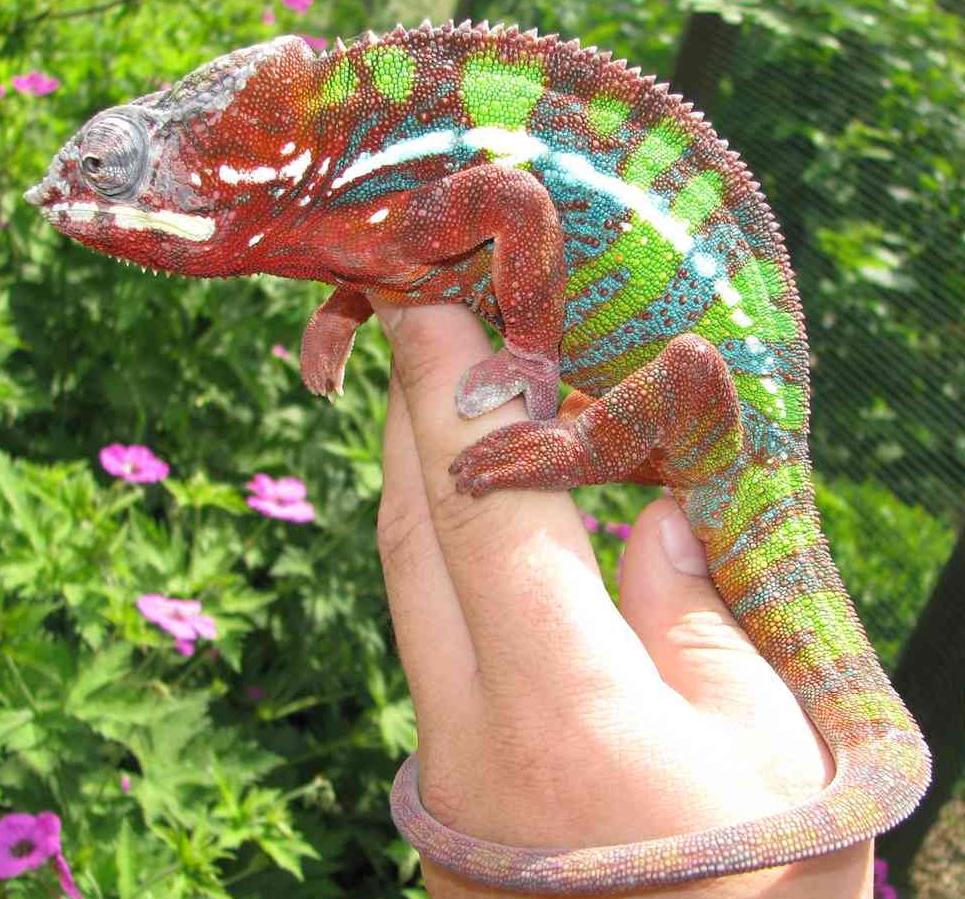 Reptilus project ambilobe