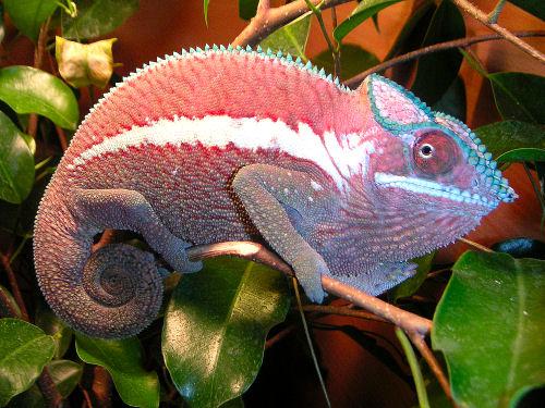 Reptilus project ankaramy