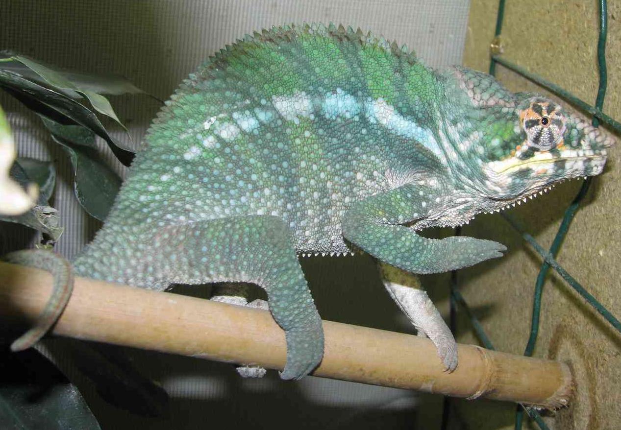Reptilus project diego suarez