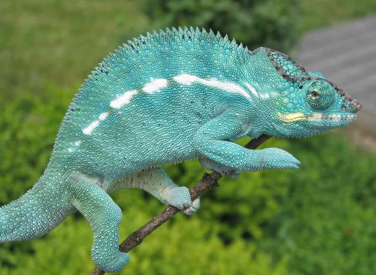Reptilus project nosy be true blue