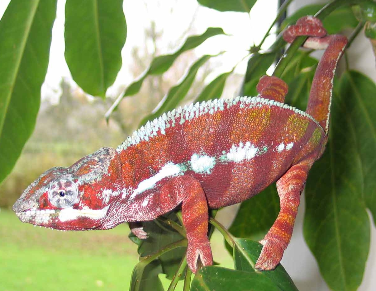 Reptilus project tamatave